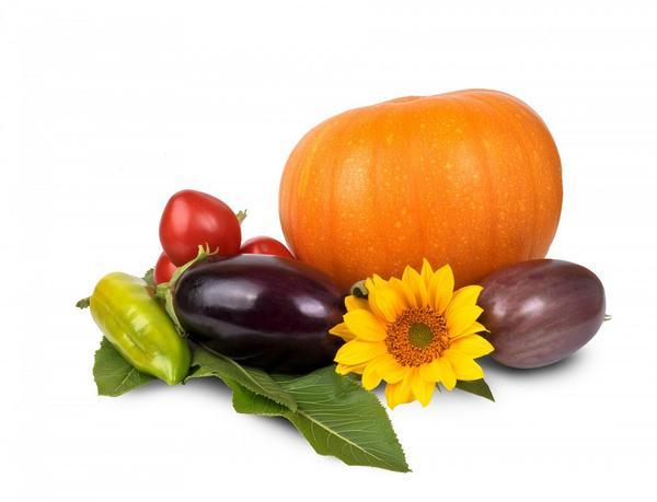 żywność ekologiczna - hurtownia
