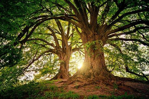 żywy las w słoiku - cena